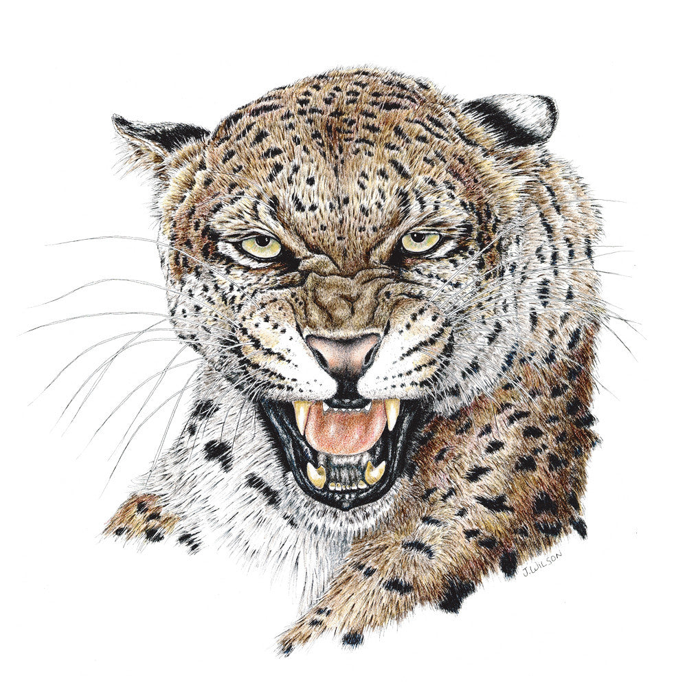Leopard Snarling Limited-Edition Print