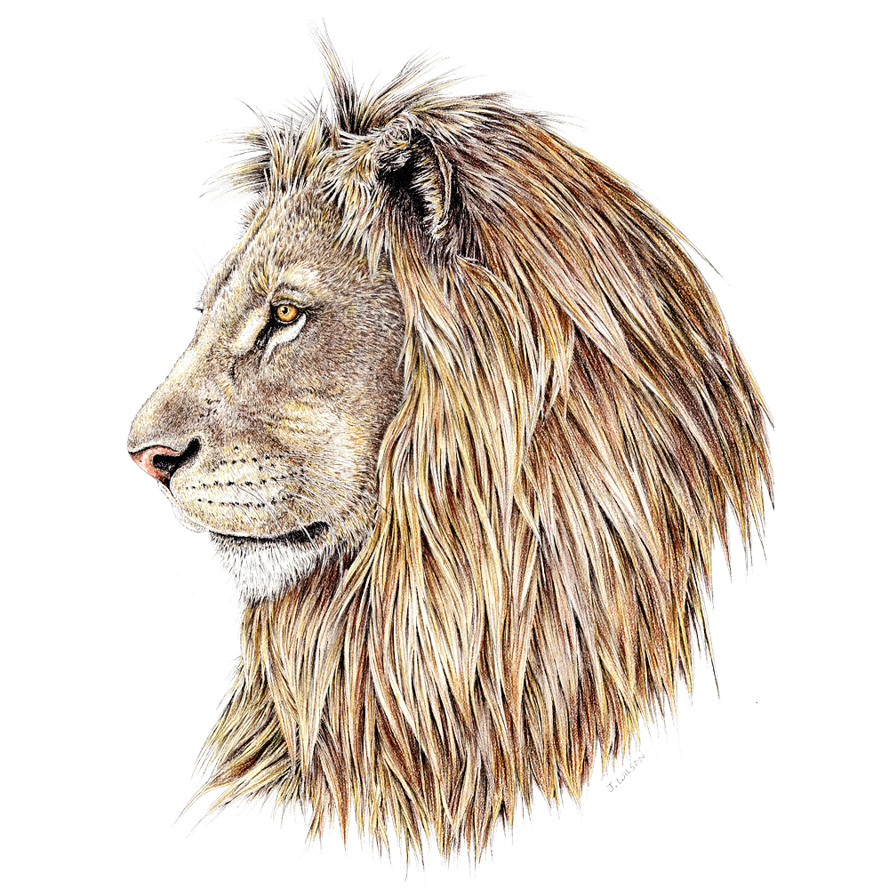 Lion Profile Limited-Edition Print