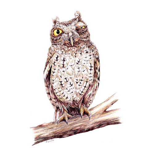 Owl Winking Limited-Edition Print