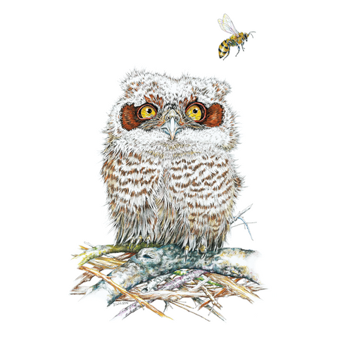 Owl and Bee Limited-Edition Print