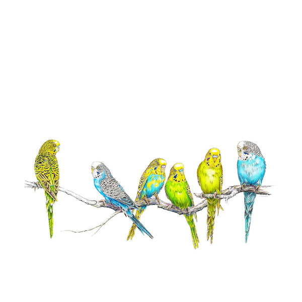 Parakeets Wildlife T-shirt