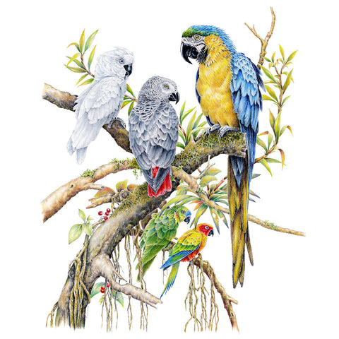Parrot Grouping - Framed Original Drawing