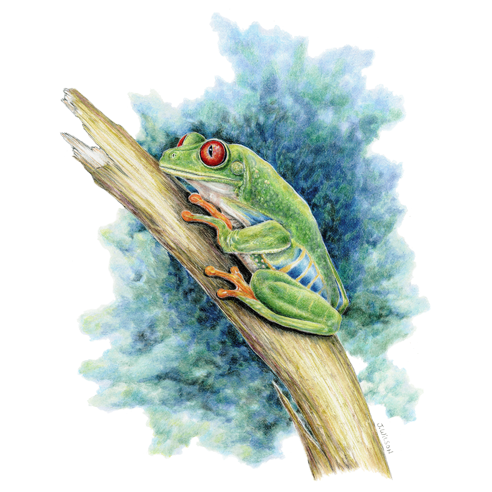 Red Eyed Tree Frog Limited-Edition Print