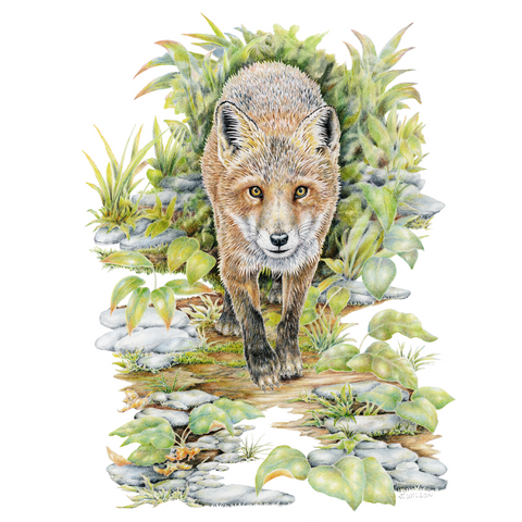 Red Fox Limited-Edition Print