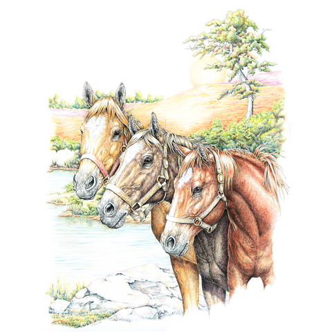 Three Horses Wildlife T-shirt