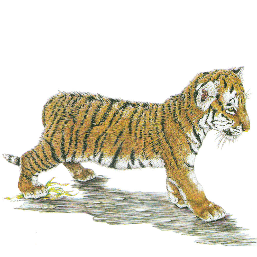 Tiger Cub Limited-Edition Print