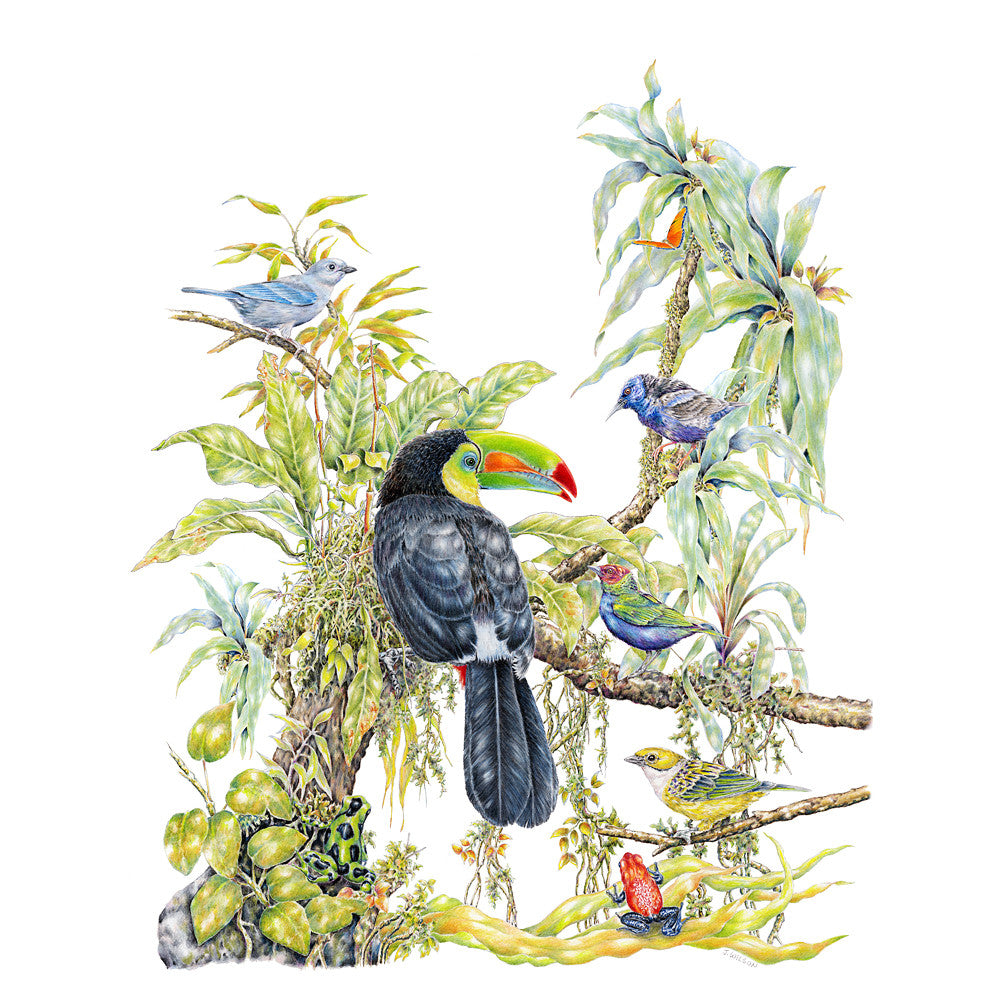 Tropical Birds Limited-Edition Print