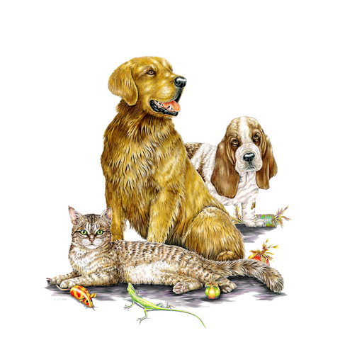 Two Dogs and a Cat Limited-Edition Print