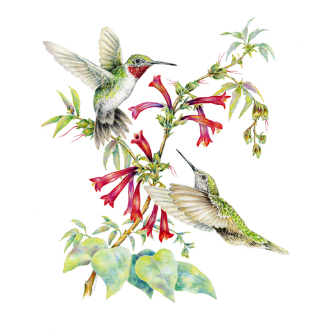 Two Ruby-Throated Hummingbirds Limited-Edition Print