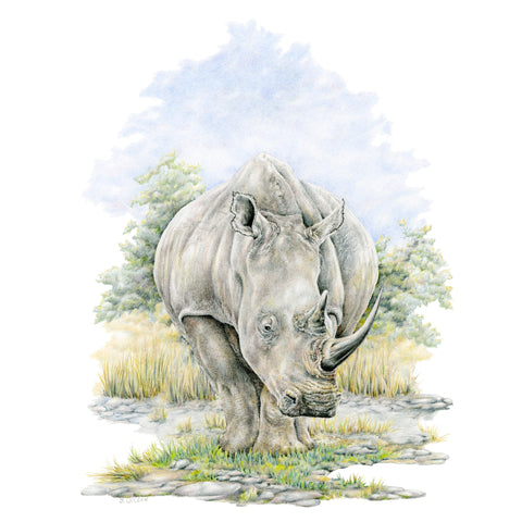 Rhino - Framed Original Drawing