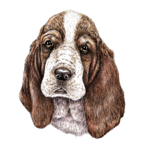 Basset Hound Wildlife Art Cloth Face Mask