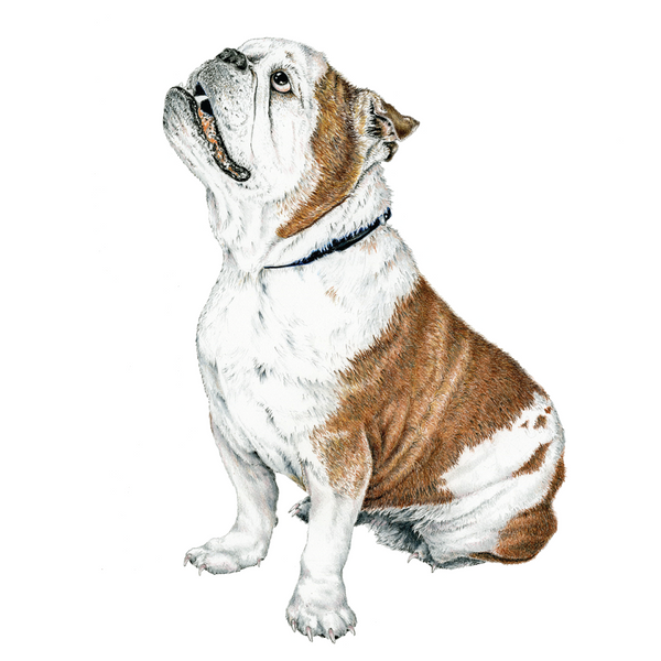 Bulldog Wildlife Art Cloth Face Mask