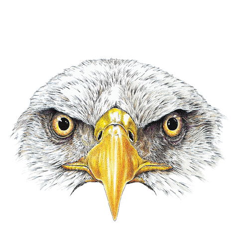 Eagle Eyes Wildlife Art Cloth Face Mask