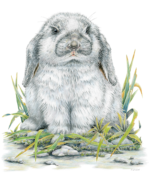 Flop Eared Rabbit  Wildlife T-shirt