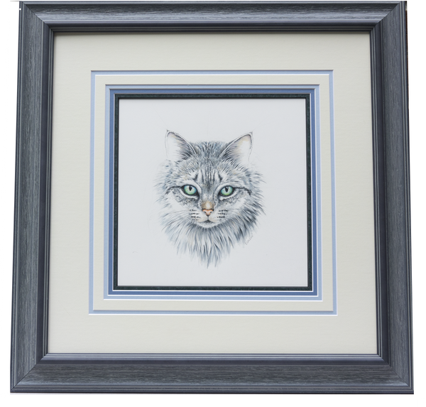 Domestic Cat Face - Framed Original Drawing