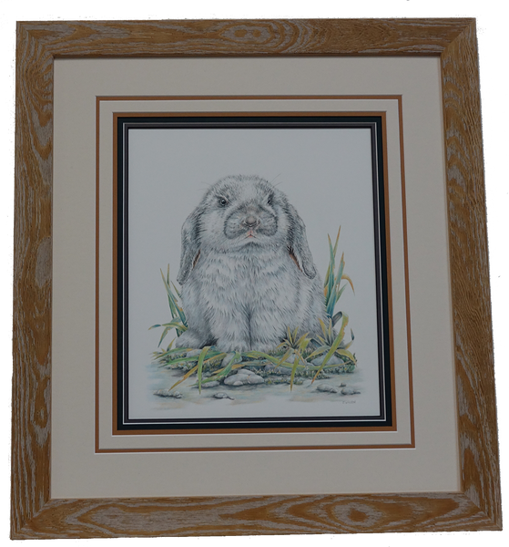 Flop Eared Rabbit- Framed Original Drawing