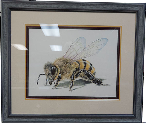 Honey Bee Framed Original Drawing