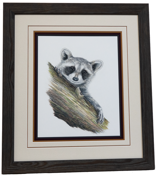Raccoon- Framed Original Drawing