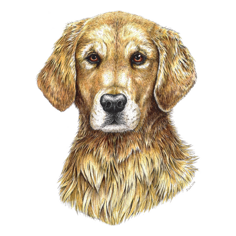 Golden Retriever Wildlife Art Cloth Face Mask