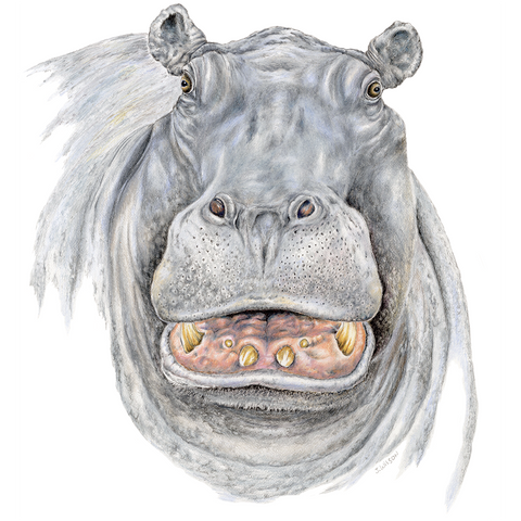 Hippo Face-Limited Edition print