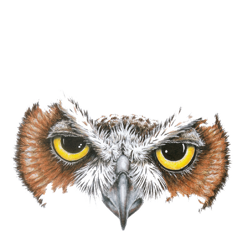 Owl Eyes Wildlife Art Cloth Face Mask