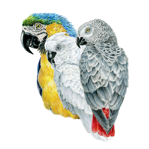 Parrots Wildlife Art Cloth Face Mask