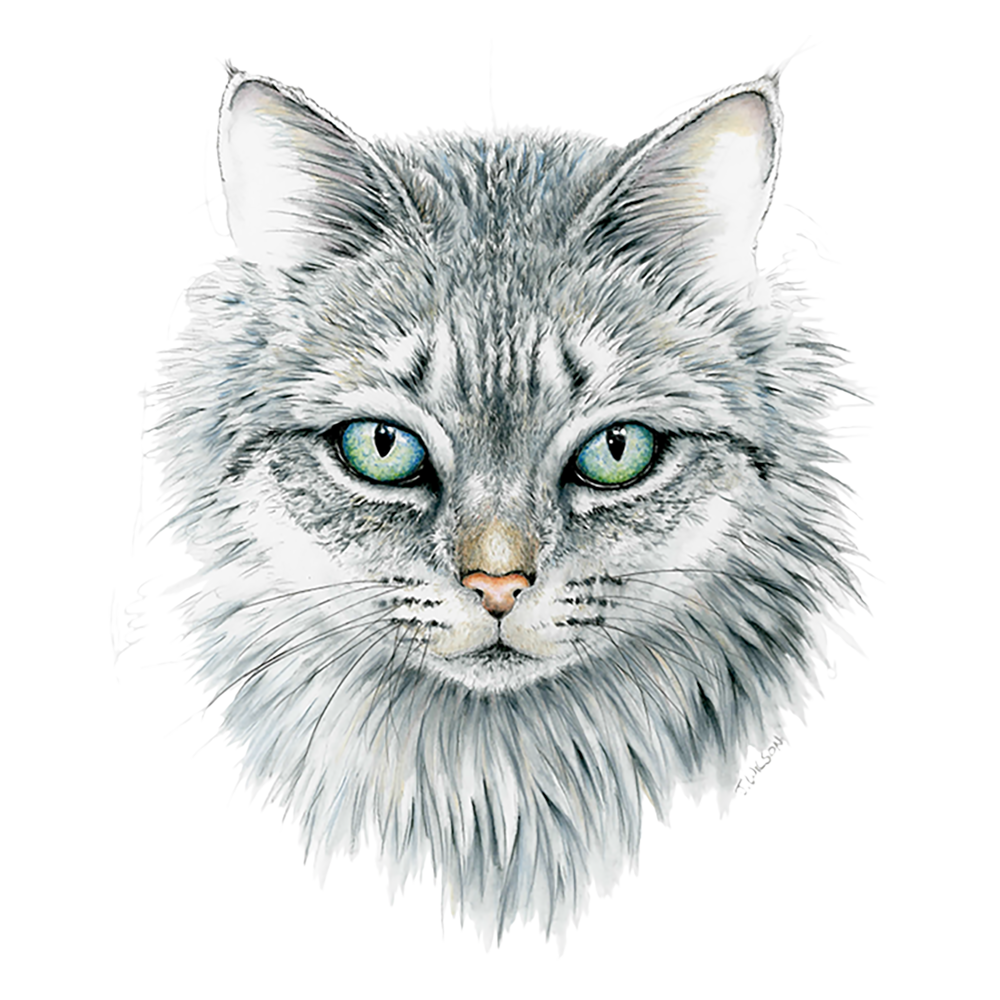 Cat Face- Limited Edition Print