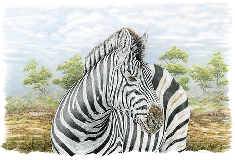 Zebra Limited-Edition Print