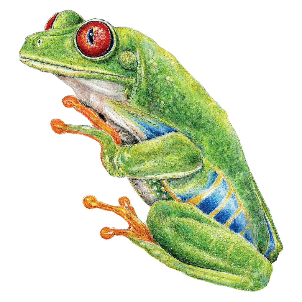 Red Eyed Tree Frog Wildlife Art Cloth Face Mask