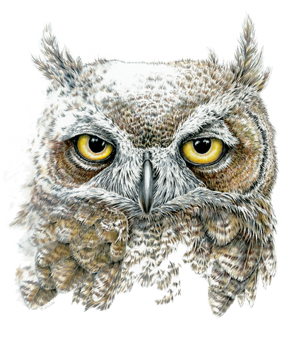 Great Horned Owl Face, Limited-Edition Print