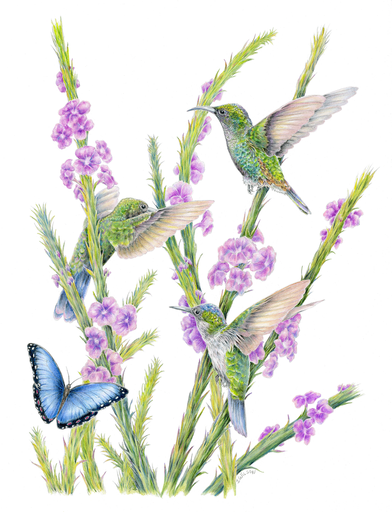 Three Hummingbirds and a Butterfly Limited-Edition Print