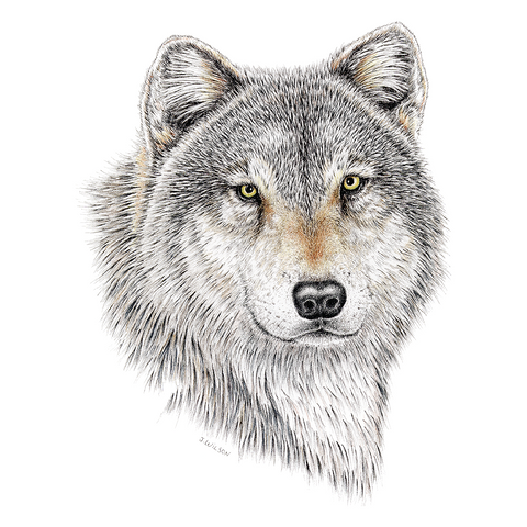 Wolf Wildlife Art Cloth Face Mask