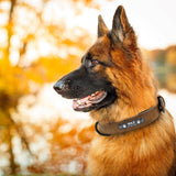 Product Picture Dog wearing the brown Pidog  Custom Leather Dog Collar