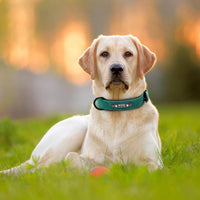 Product Picture Dog wearing the green Pidog Custom Leather Dog Collar