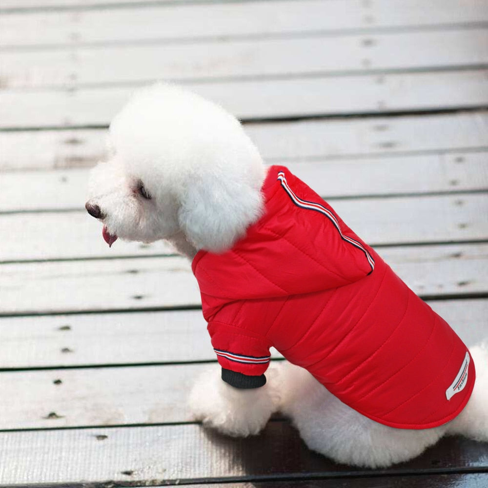 Dog Parka Coat -  DoggiDreams