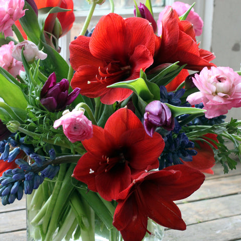 amaryllis arrangement delivered by sewickley florist