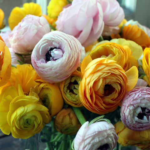 vase of ranunculus by sewickley florist