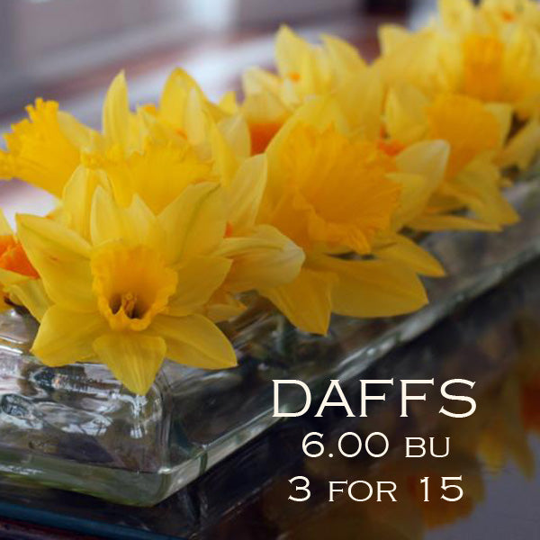 daffodil special at cuttings in pittsburgh pa