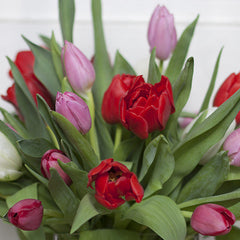 holland tulips - cuttings flowers in sewickley & pittsburgh