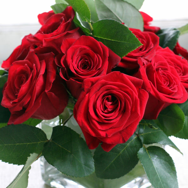 valentine roses from cuttings in sewickley, pa