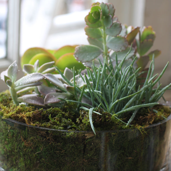 send succulent garden by cuttings in sewickley pa