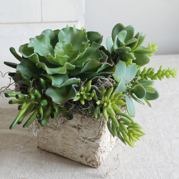 faux succulents in birch box from cuttings' home collection