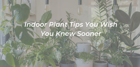 Photo of plants with a link to an article on plant care tips