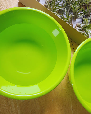 bowls with water to clean air plants, Maddi and Joan