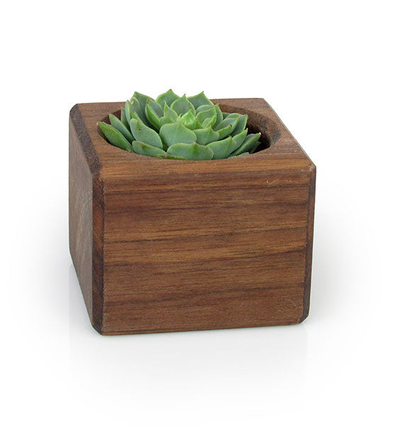 Wood Thumb, Magnetic Succulent Planter