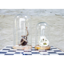 Clear Glass Dome Medium