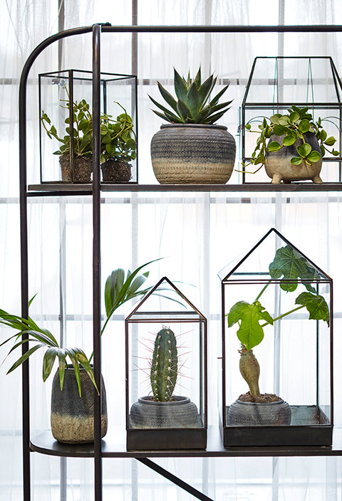 Ama Greenhouse Small