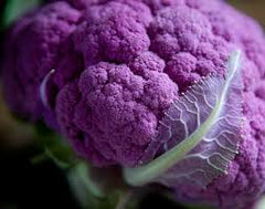 Cauliflower, Purple (4-pack)