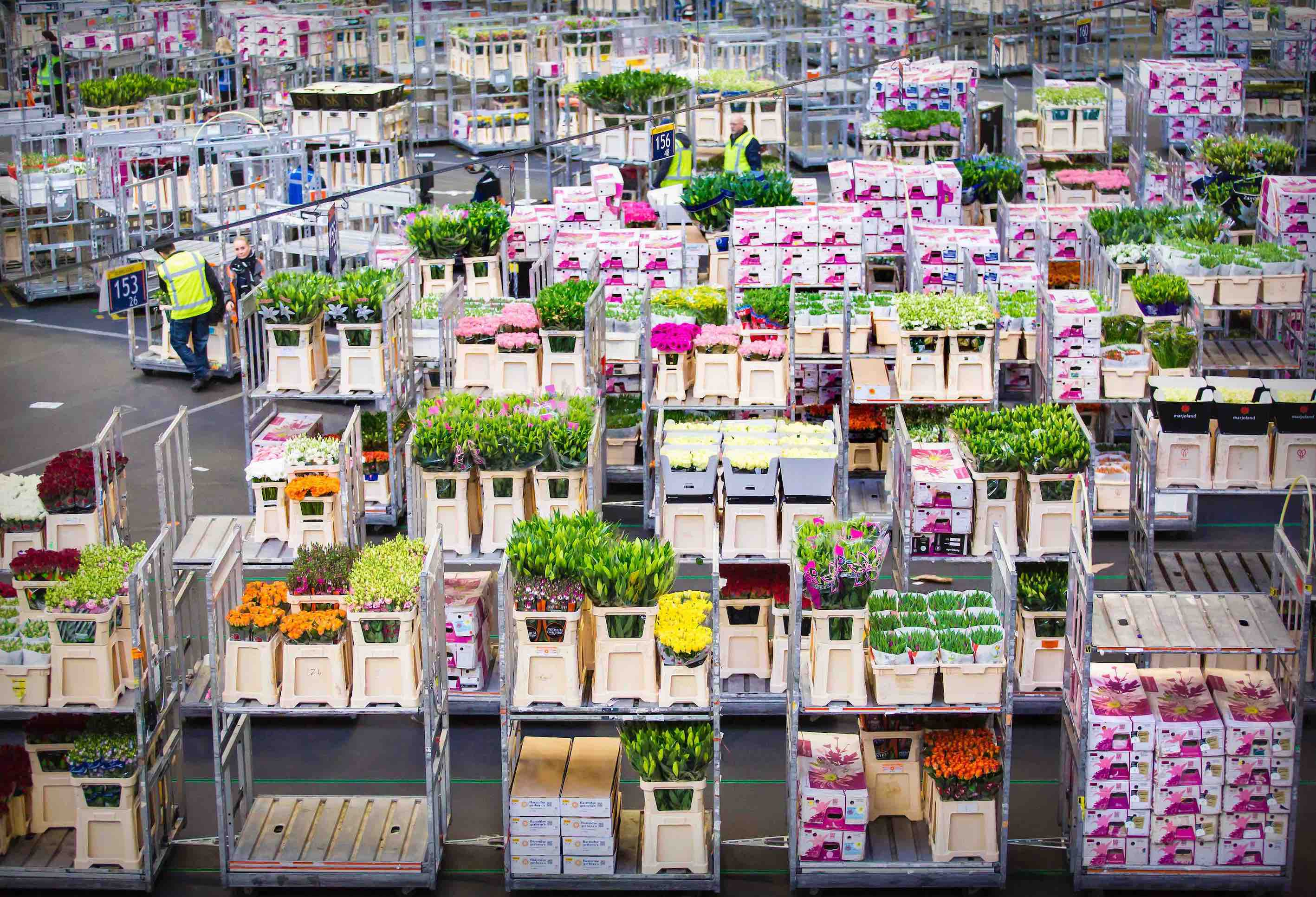 Private tour to the flower auction in holland