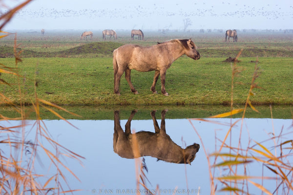 Tour National Park Netherlands & Encounter Wild Horses